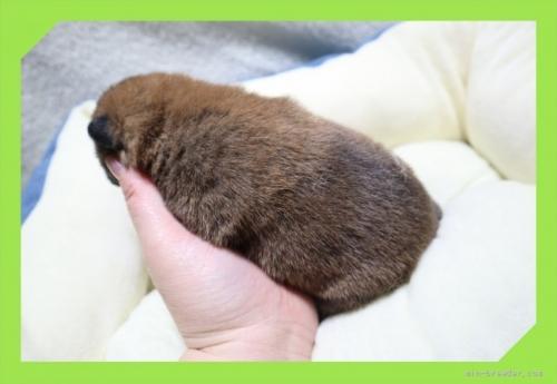 柴犬の子犬(ID:1248211149)の4枚目の写真/更新日:2021-09-10