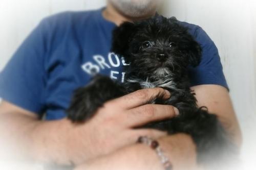 ミックスの子犬(ID:1248211174)の1枚目の写真/更新日:2017-05-15