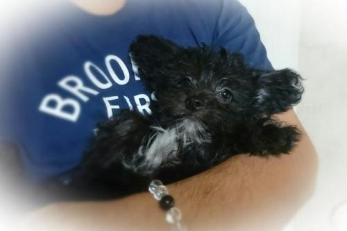 ミックスの子犬(ID:1248211174)の2枚目の写真/更新日:2017-06-26