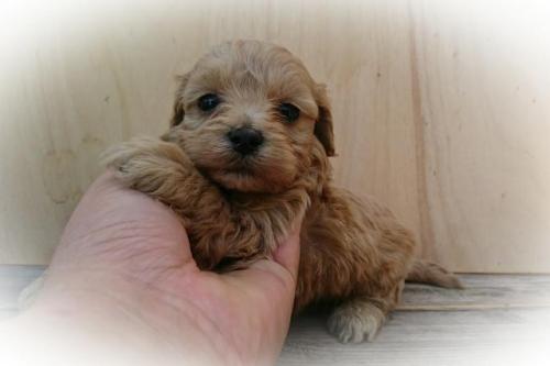 ミックスの子犬(ID:1248211181)の1枚目の写真/更新日:2017-06-19