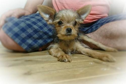 ミックスの子犬(ID:1248211185)の1枚目の写真/更新日:2017-07-18