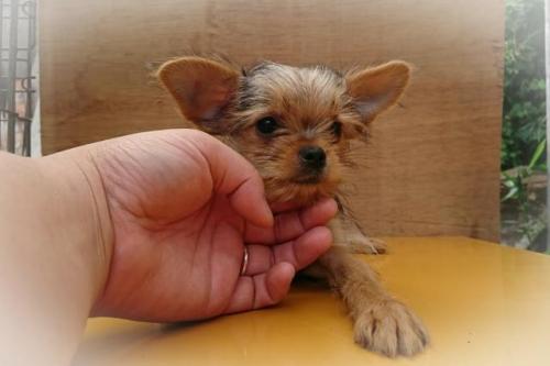 ミックスの子犬(ID:1248211185)の2枚目の写真/更新日:2017-07-18