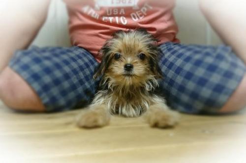 ミックスの子犬(ID:1248211186)の1枚目の写真/更新日:2017-07-18