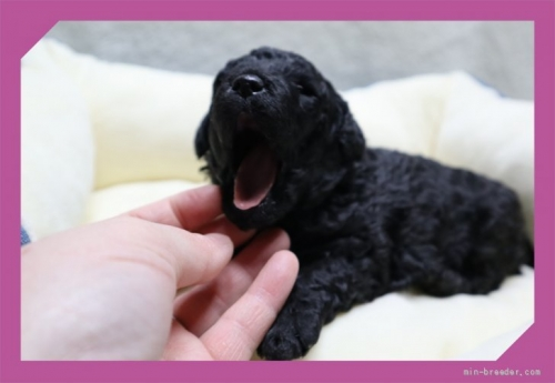 ミックスの子犬(ID:1248211230)の2枚目の写真/更新日:2018-02-22