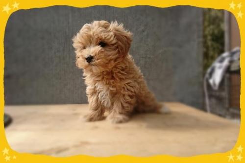 ミックスの子犬(ID:1248211231)の1枚目の写真/更新日:2018-01-08