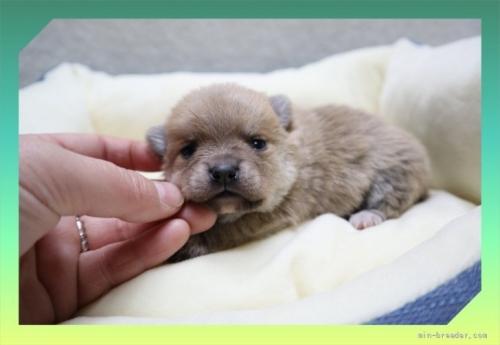 ミックスの子犬(ID:1248211232)の1枚目の写真/更新日:2018-01-08