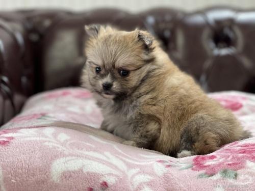 ミックスの子犬(ID:1248411040)の2枚目の写真/更新日:2019-12-05