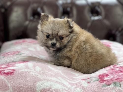 ミックスの子犬(ID:1248411040)の3枚目の写真/更新日:2019-09-30