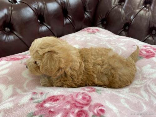 ミックスの子犬(ID:1248411074)の2枚目の写真/更新日:2018-08-06