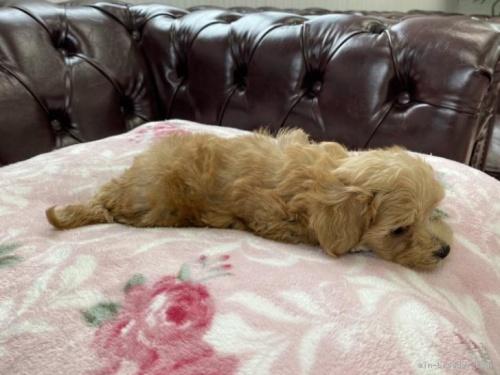 ミックスの子犬(ID:1248411074)の3枚目の写真/更新日:2019-10-11