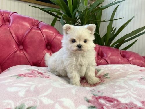 ミックスの子犬(ID:1248411099)の1枚目の写真/更新日:2018-05-28