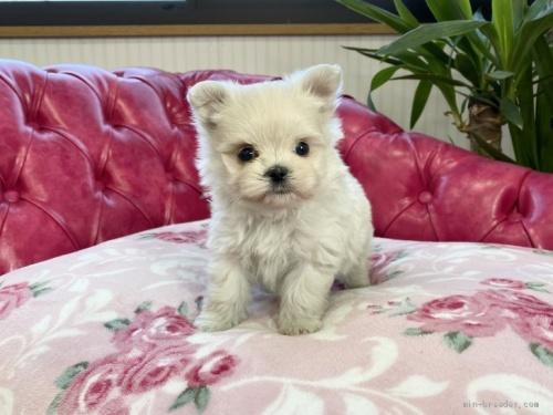 ミックスの子犬(ID:1248411099)の2枚目の写真/更新日:2018-05-28