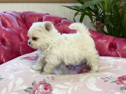 ミックスの子犬(ID:1248411099)の3枚目の写真/更新日:2018-05-28
