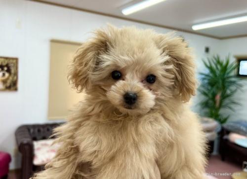 ミックスの子犬(ID:1248411155)の1枚目の写真/更新日:2018-05-28