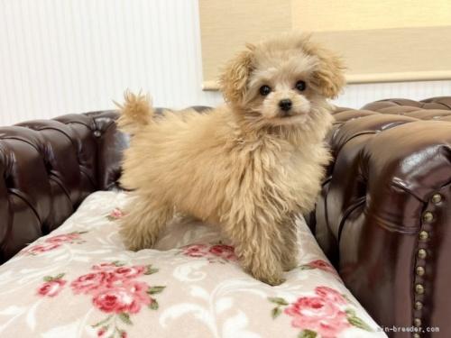 ミックスの子犬(ID:1248411155)の2枚目の写真/更新日:2019-09-21