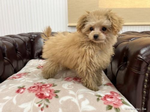 ミックスの子犬(ID:1248411155)の3枚目の写真/更新日:2019-09-21