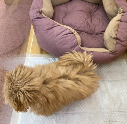 ミックスの子犬(ID:1248411155)の4枚目の写真/更新日:2019-01-17