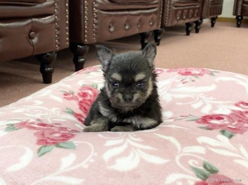 ミックスの子犬(ID:1248411171)の1枚目の写真/更新日:2019-09-21