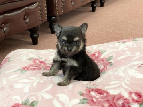 ミックスの子犬(ID:1248411171)の2枚目の写真/更新日:2019-09-21