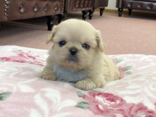 ミックスの子犬(ID:1248411172)の1枚目の写真/更新日:2019-10-11