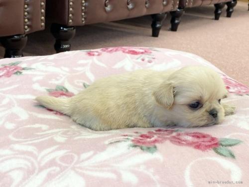 ミックスの子犬(ID:1248411172)の3枚目の写真/更新日:2019-10-11