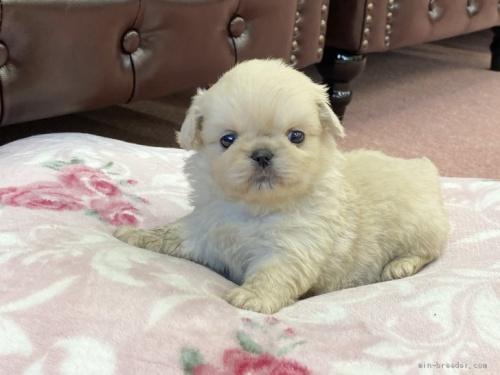 ミックスの子犬(ID:1248411180)の1枚目の写真/更新日:2020-04-14
