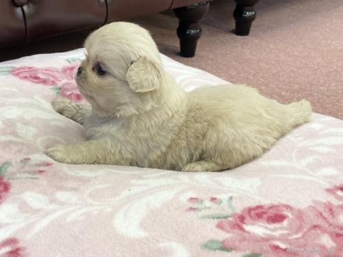 ミックスの子犬(ID:1248411180)の2枚目の写真/更新日:2019-12-09