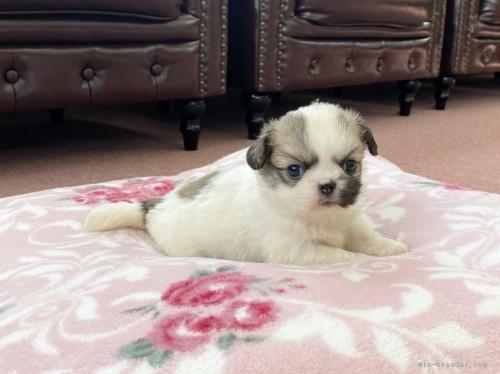 ミックスの子犬(ID:1248411185)の2枚目の写真/更新日:2020-05-09