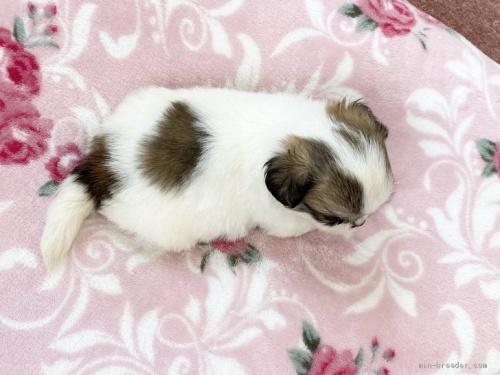 ミックスの子犬(ID:1248411185)の3枚目の写真/更新日:2020-05-09