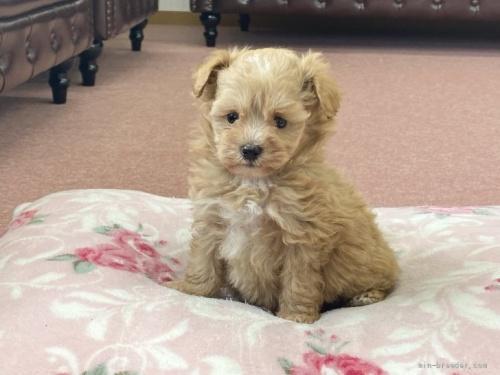 ミックスの子犬(ID:1248411187)の1枚目の写真/更新日:2021-09-13