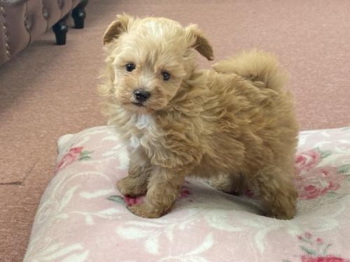 ミックスの子犬(ID:1248411187)の2枚目の写真/更新日:2021-09-13