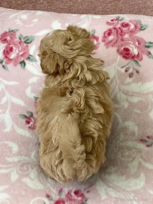 ミックスの子犬(ID:1248411187)の4枚目の写真/更新日:2021-09-13