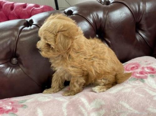 ミックスの子犬(ID:1248411196)の2枚目の写真/更新日:2021-08-19