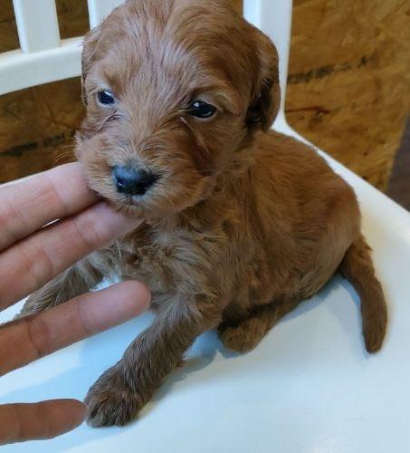 ミックスの子犬(ID:1248811028)の1枚目の写真/更新日:2020-12-11