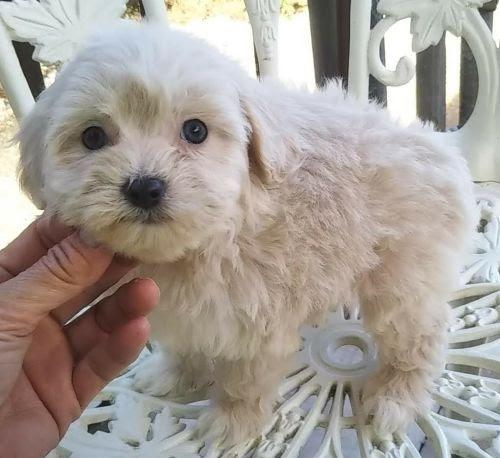 ミックスの子犬(ID:1248811029)の1枚目の写真/更新日:2020-12-11