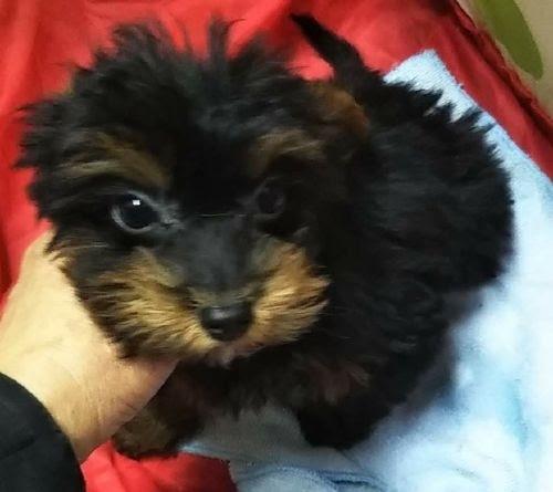 ミックスの子犬(ID:1248811040)の1枚目の写真/更新日:2019-03-22