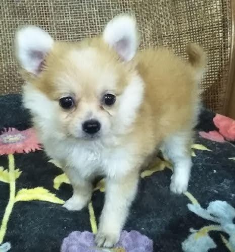 ミックスの子犬(ID:1248811047)の1枚目の写真/更新日:2019-02-24