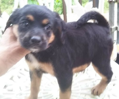 ミックスの子犬(ID:1248811067)の1枚目の写真/更新日:2016-10-14