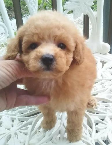 ミックスの子犬(ID:1248811071)の1枚目の写真/更新日:2021-05-14