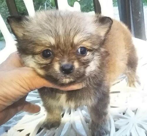 ミックスの子犬(ID:1248811090)の1枚目の写真/更新日:2021-05-14
