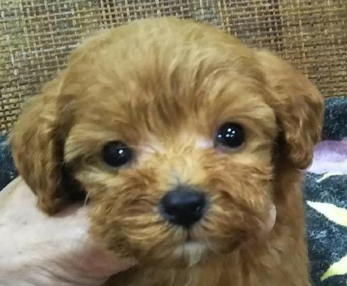 ミックスの子犬(ID:1248811103)の1枚目の写真/更新日:2021-06-22