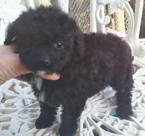 ミックスの子犬(ID:1248811106)の1枚目の写真/更新日:2017-02-28