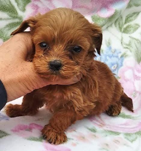 ミックスの子犬(ID:1248811109)の1枚目の写真/更新日:2017-02-28