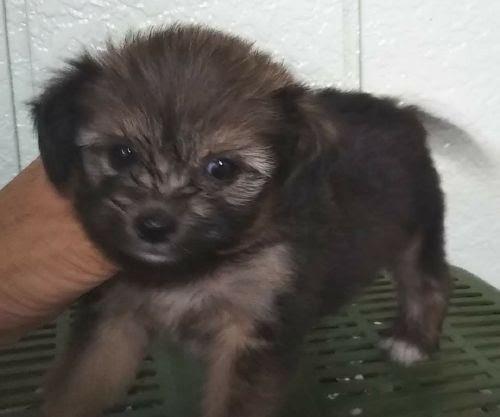 ミックスの子犬(ID:1248811121)の1枚目の写真/更新日:2017-07-26