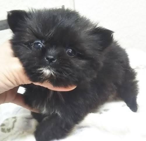 ミックスの子犬(ID:1248811122)の1枚目の写真/更新日:2021-06-06