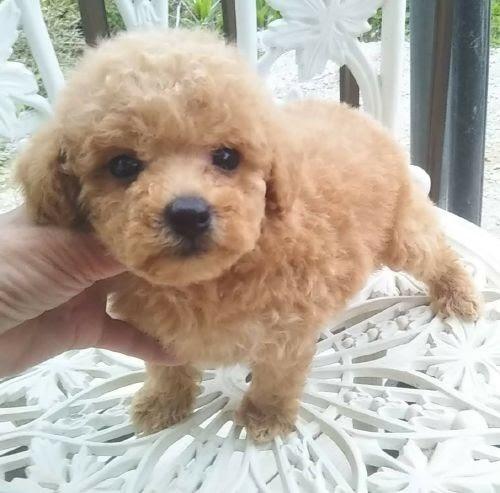 ミックスの子犬(ID:1248811123)の1枚目の写真/更新日:2021-05-14