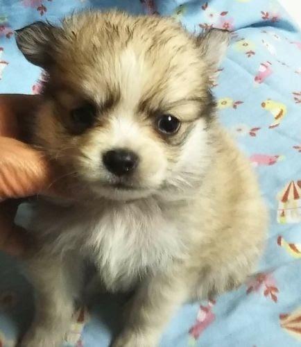 ミックスの子犬(ID:1248811129)の1枚目の写真/更新日:2017-08-18