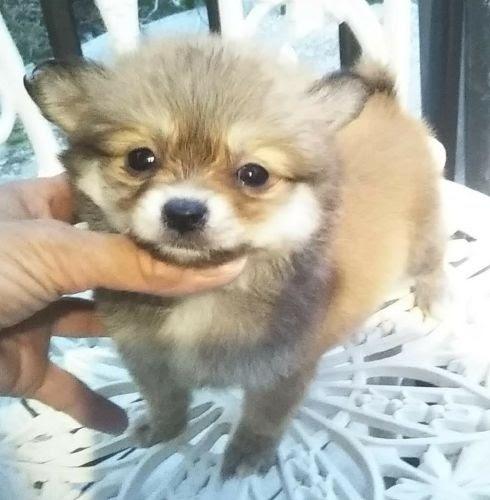 ミックスの子犬(ID:1248811135)の1枚目の写真/更新日:2021-05-14
