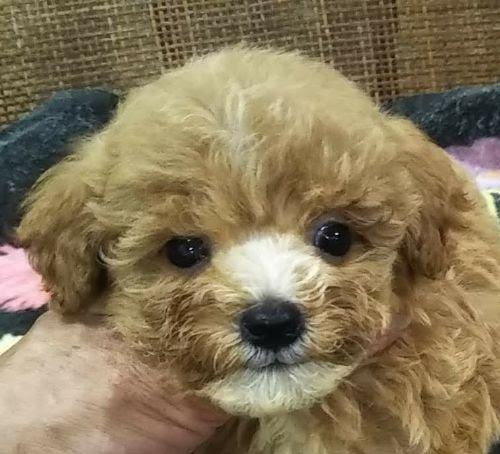 ミックスの子犬(ID:1248811141)の1枚目の写真/更新日:2021-06-22