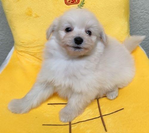 ミックスの子犬(ID:1248811147)の1枚目の写真/更新日:2021-06-22